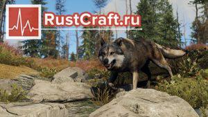 Обновлённый волк в Rust
