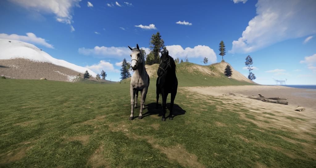 Белый,чёрный чистокровный - лошади в Rust