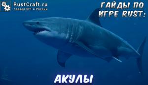 Гайды в Rust - акулы